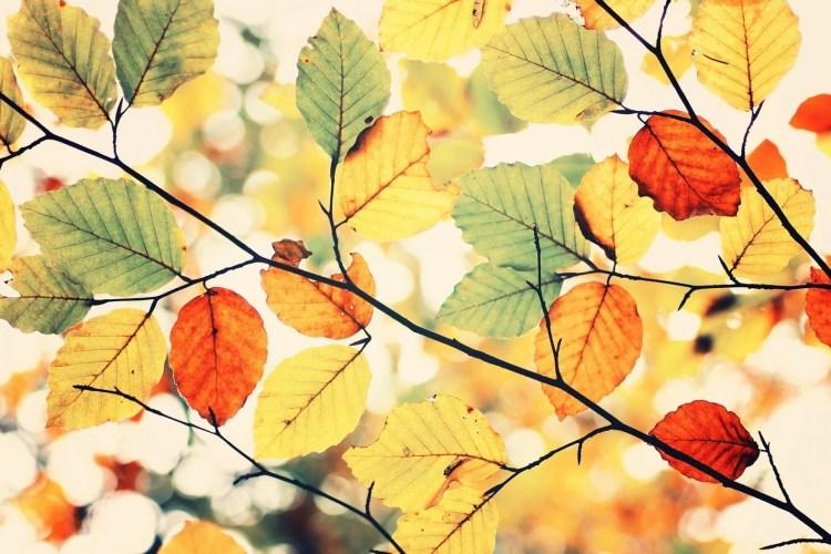 Jak pokochać jesień + przepis na rozgrzewającą herbatę