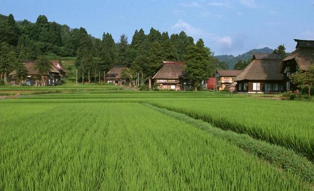중국 농촌