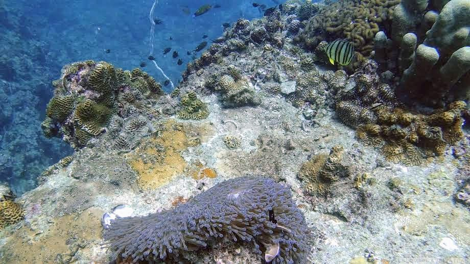 Coral reef with anemone and fish