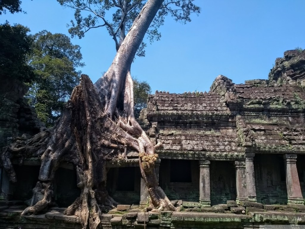 Tree roots overtaking a building at the Preah Khan temple