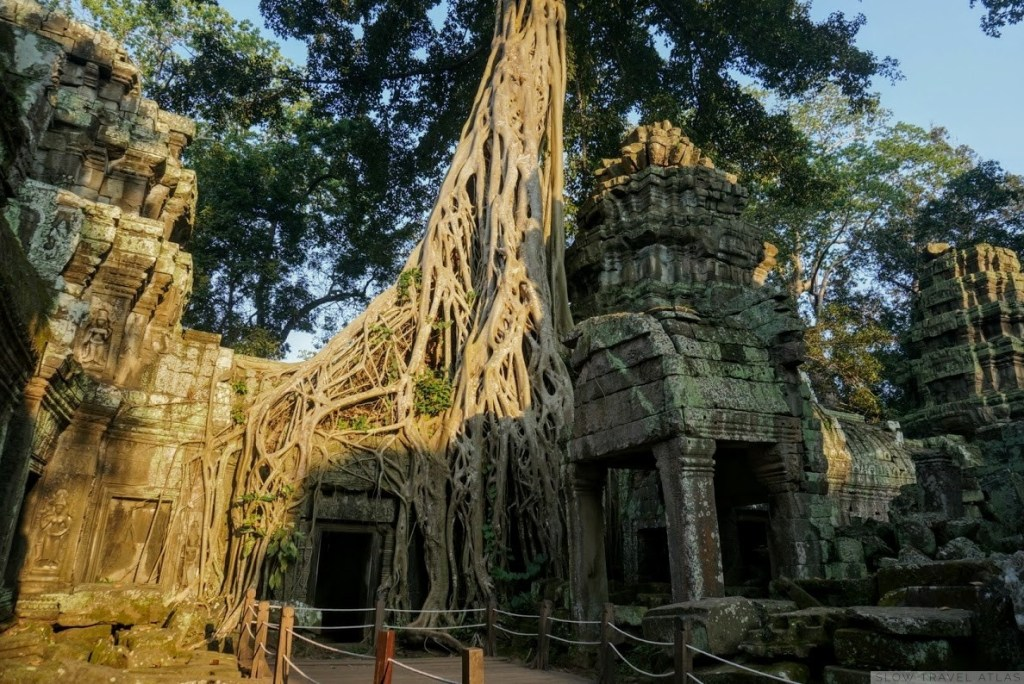 Ta Prohm tree overtaking a building