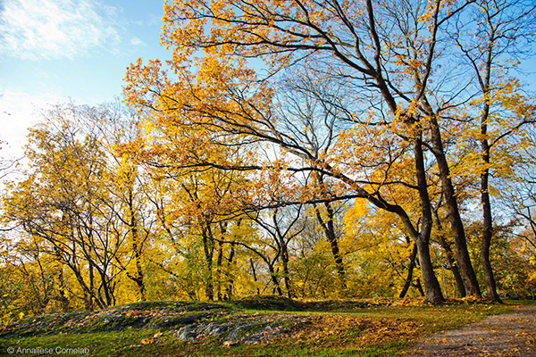 Autumn in Stockholm - Photos by Annaliese Comelab