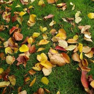 hojascesped-300x300 14 consejos sobre la limpieza en Otoño
