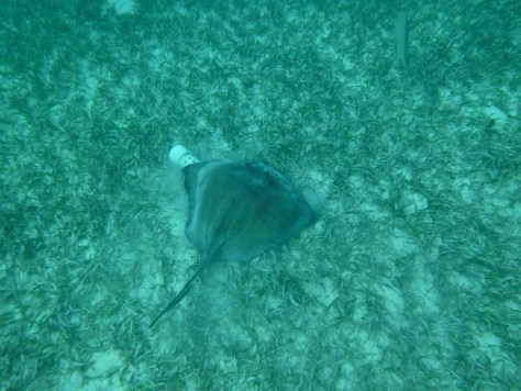 And swimming with stingrays!