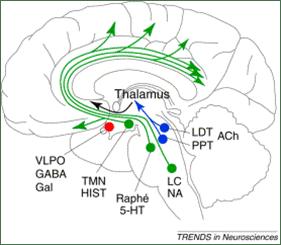 4. 腦網路   宅學習
