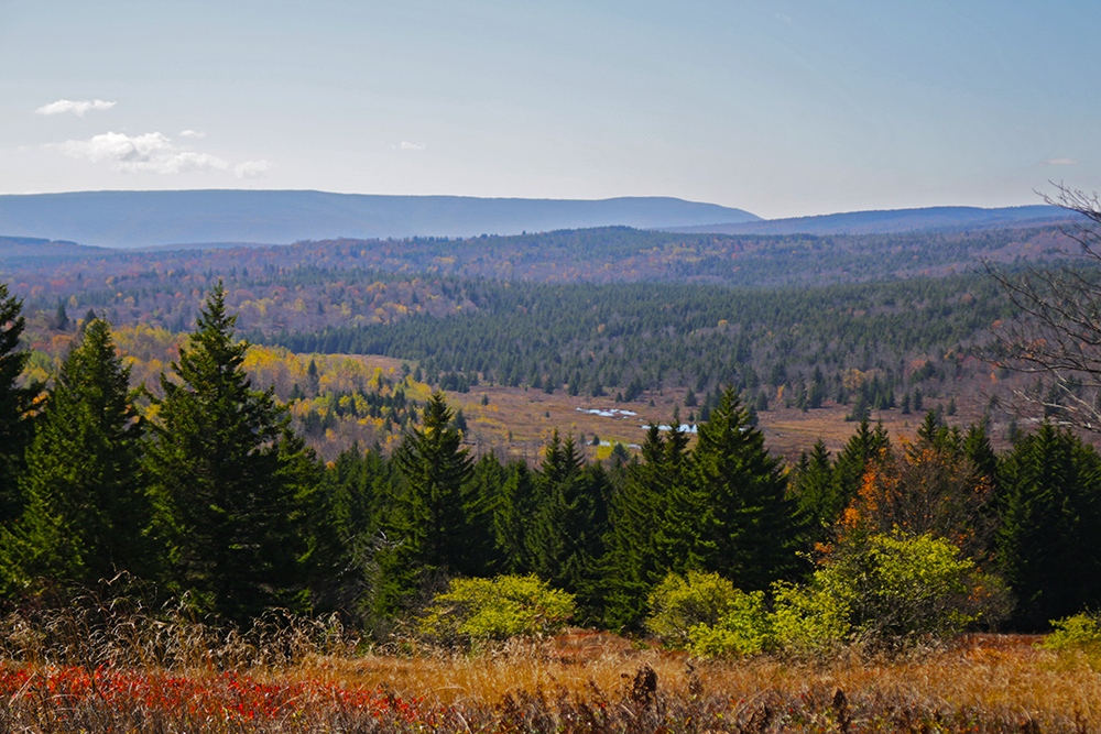 The Bear Rocks trail in the Dolly Sods Wilderness, Slucherville