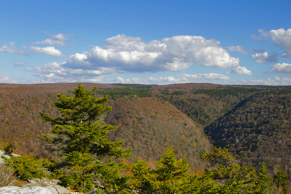 The view from Lion's Head, in the Dolly Sods Wilderness
