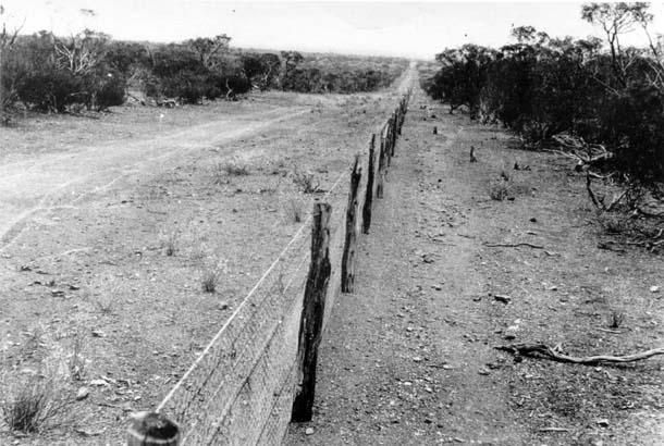 Image result for rabbit proof fence australia