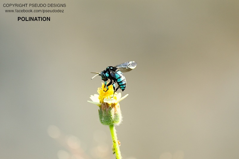 strange looking bee
