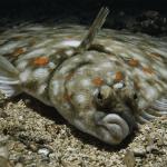 Det siges at 90% af fiskene findes i 10% af vandet – hvor fisker du?