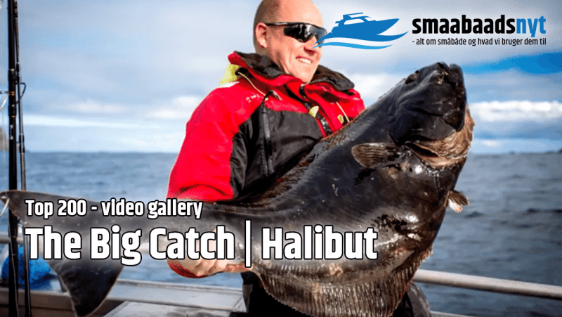 top200-halibut