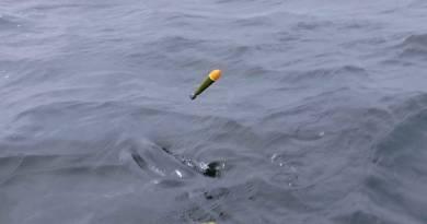 Flådfiskeri efter laks