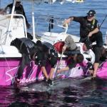 VILDT TUN-FISKERI IDAG !! over 20 tunfisk fanget!!!