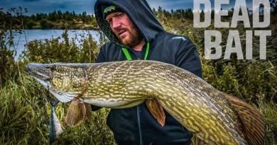 Ekspert-tips til fiskeri med død agn