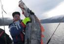 Sjælden fangst – en vågmær på krogen!