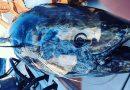 EKSTREMT tunfiskeri IDAG med flere fisk i bådene