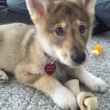 anja puppy