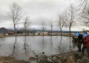 凍っている池