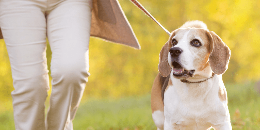 walk the dog to take a break from your business