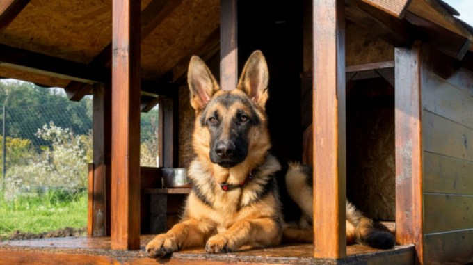 50 Unusual Pet Business Ideas to Consider Starting - Small ...