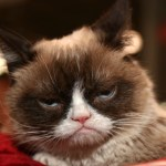 Grumpy Cat Wins $710,001 in Trademark Lawsuit Against Small Beverage Business