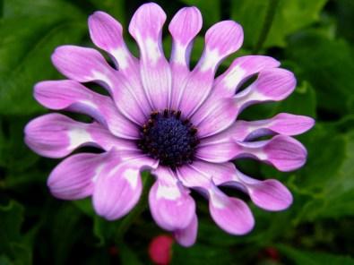 whirligig purple