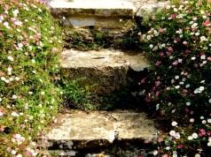 Steps through Santa Barbara Dasies