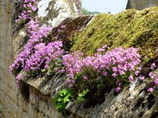 a living cotswolds wall
