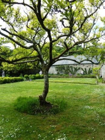 The Magnolia tree