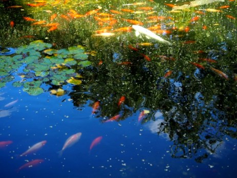 Imola Garden Pond