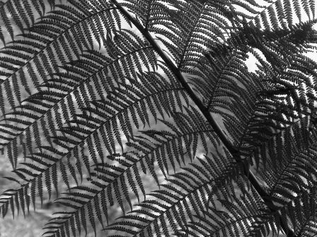 tree fern detail