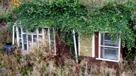 The demise of the potting-shed
