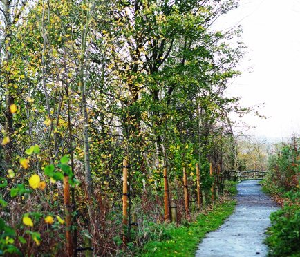 Along the footpath