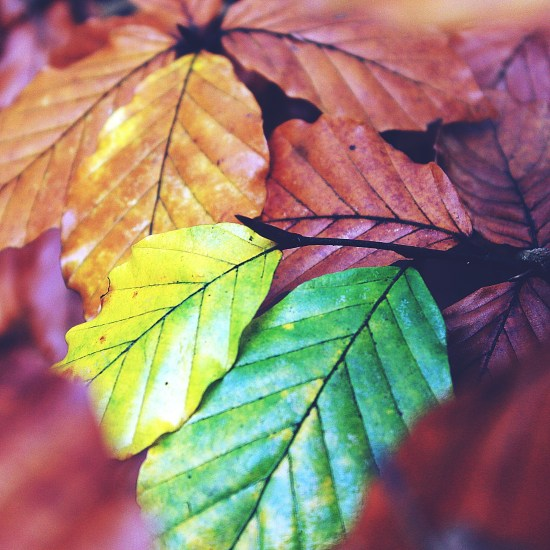 Photo of autumn leaves by Pixabay photographer Tante Tati