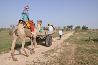 Go on a camel safari in Bikaner (Vino Desert Safari - ask for Husain to guide you)