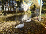 Swans on the Provenierssingel