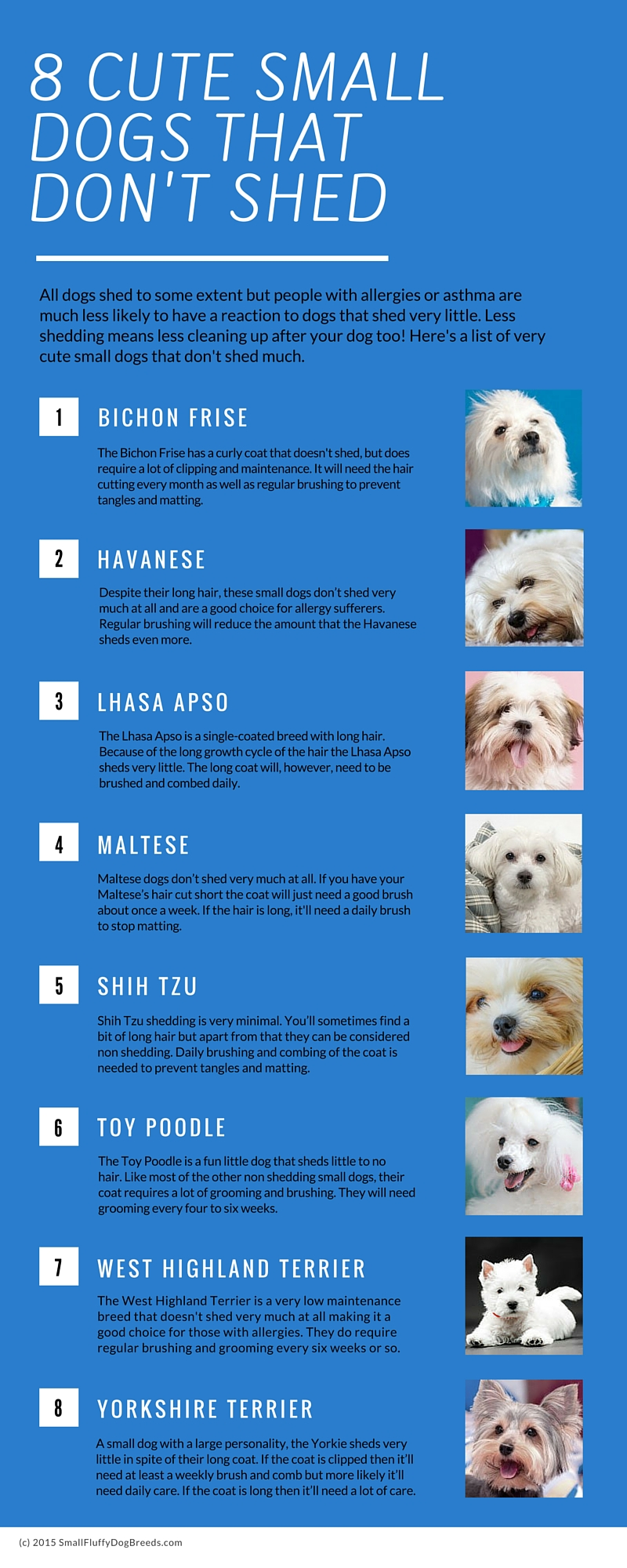 Image Result For Small Dogs For People With Allergies