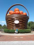 Largest Basket of Apples