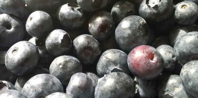 Blueberries from the Store