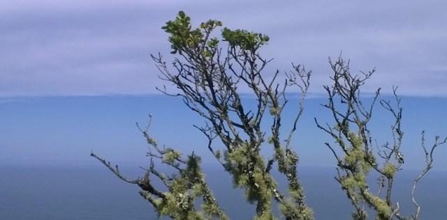 Branches Against Blue Montara Mountain, CA