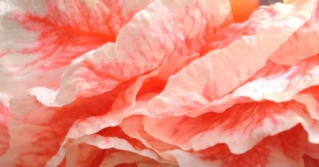 Pomegranate Flower Petals Davis CA small life details