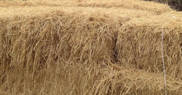 Straw Bales Restoration Site Montara CA