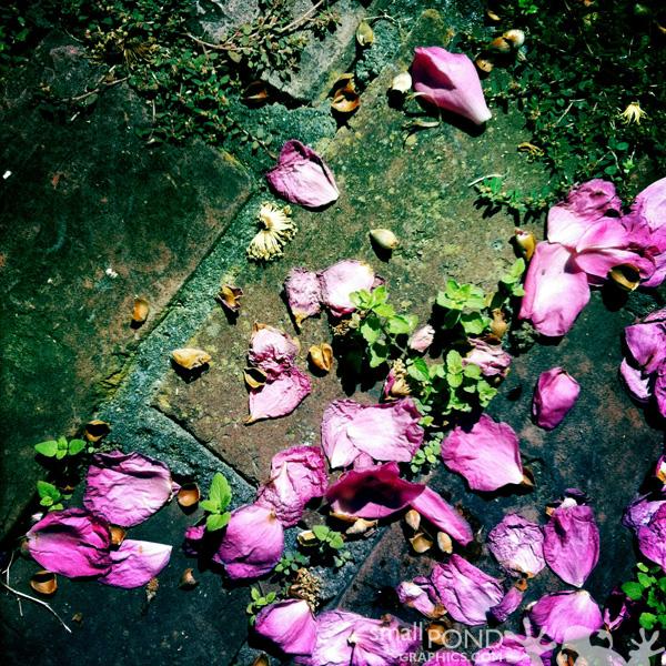 camellia6