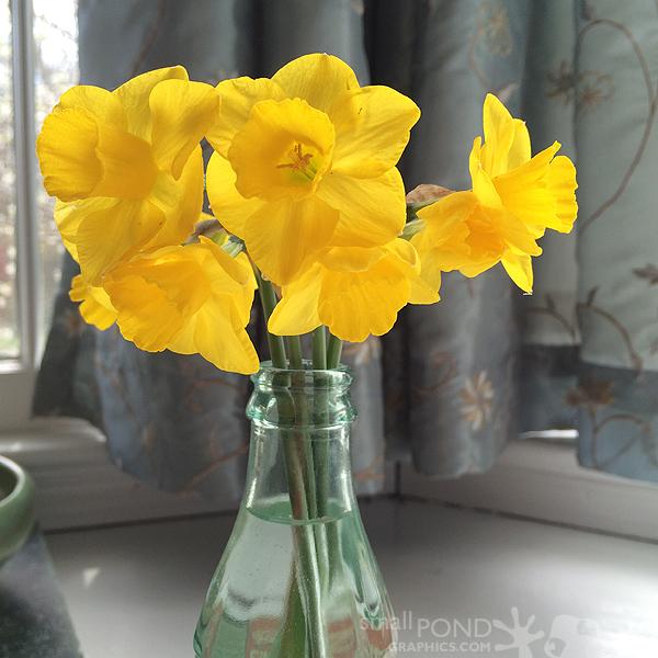 mar_daffodils8