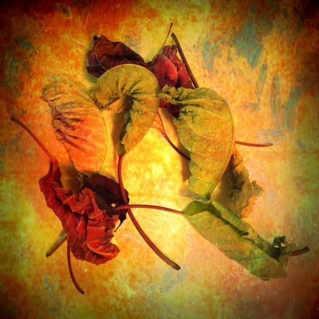 Leaves by Gene Wilburn