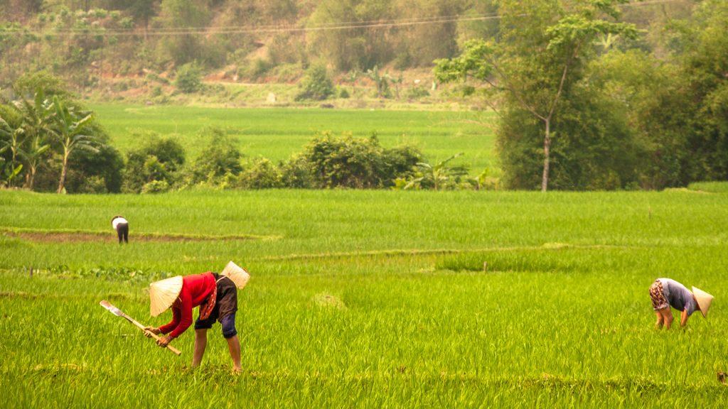 vietnam-rice-terrace-field