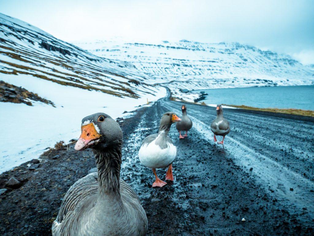 Oche-strada-Seydisfjordur-iceland