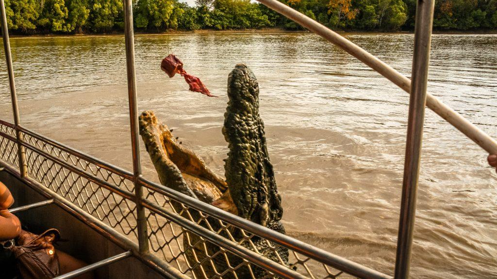 jumping-Crocodiles-darwin-river