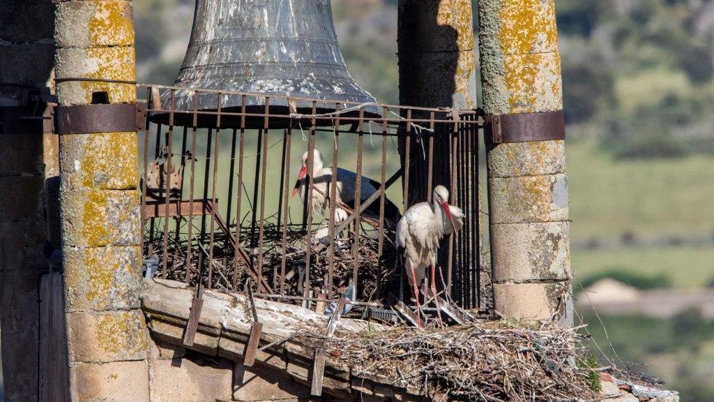 Cicogne nel campanile di Trujillo estremadura Spagna