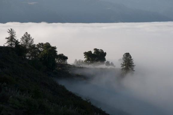 Fog after Lauds